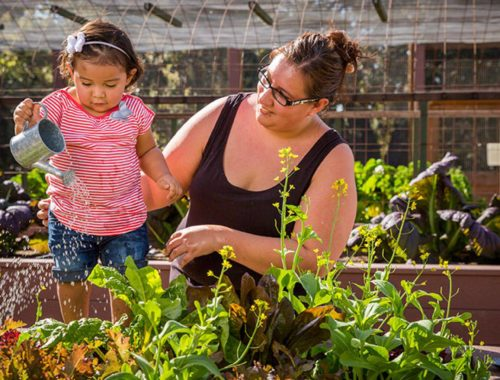 family feeding plants' soil, fertility