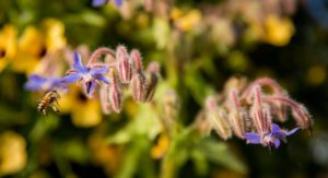 slow gardening with organic fertilizers, bug