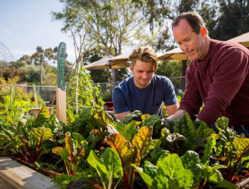 Father and son working an organic garden