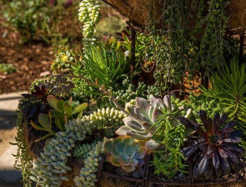 container garden filled with succulents