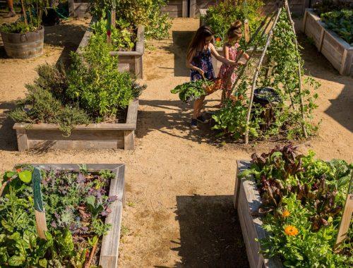 children in raised bed gardens