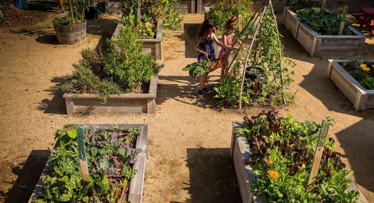 children in raised bed gardens