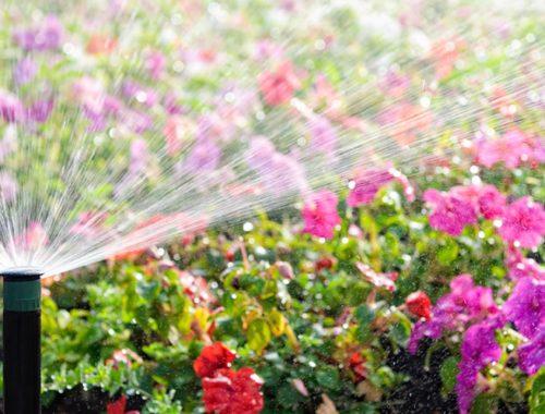 sprinkler-water-saving organic gardening solution