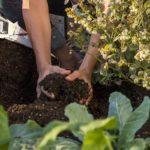 article-organic-gardening-saves-water