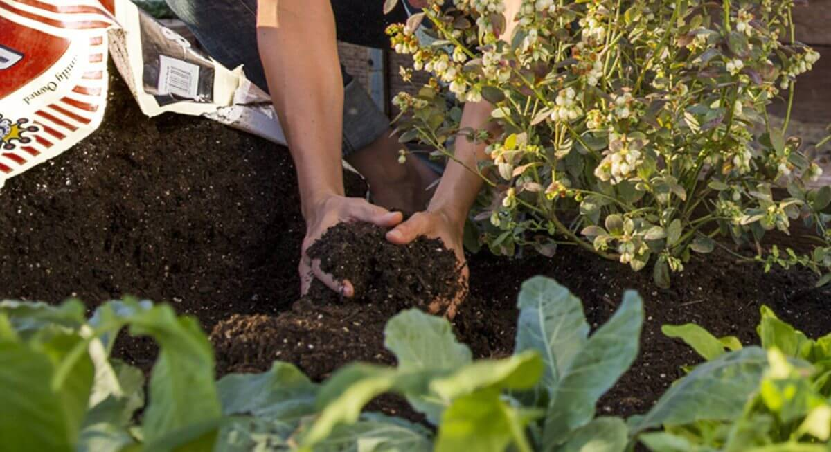 article-organic-gardening-saves-water