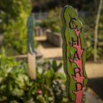 5-easy-steps-to-urban-gardening