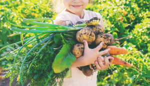 Little girl holding potatoes, carrots, green onions, and other vegetables.