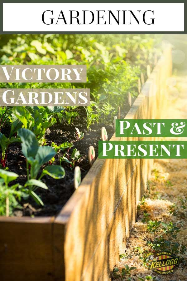 """Raised bed gardens with text, """"Victory gardens past and present"""""""