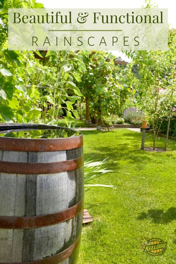 Rain Barrel on green lawn.