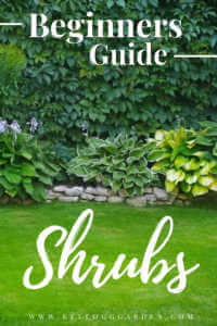 """Lush, green lawn with shrubs and text, """"Beginners guide, shrubs"""""""