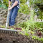 Fall Home Gardening in Reno – Vegetable Garden Design