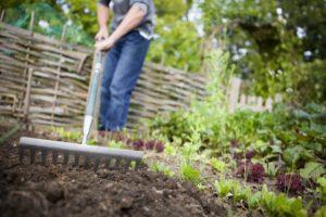 Fall Home Gardening in Reno – Vegetable Garden Design
