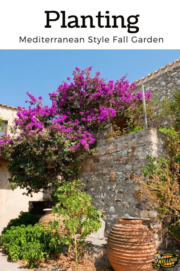 pink purple flower in the garden