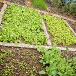 Monterrey and Mediterranean style fall gardening