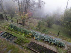 Portland, Oregon Native Plants – An Ocean of Lush Greenery