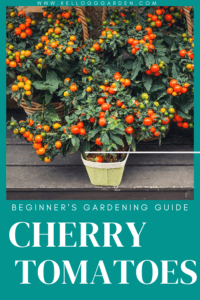 potted cherry tomatoes pin image