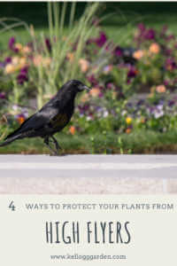 """Bird sitting by garden with text, """"Protect your garden from high flyers"""""""