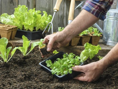 Money-Saving Tips for the Organic Gardener