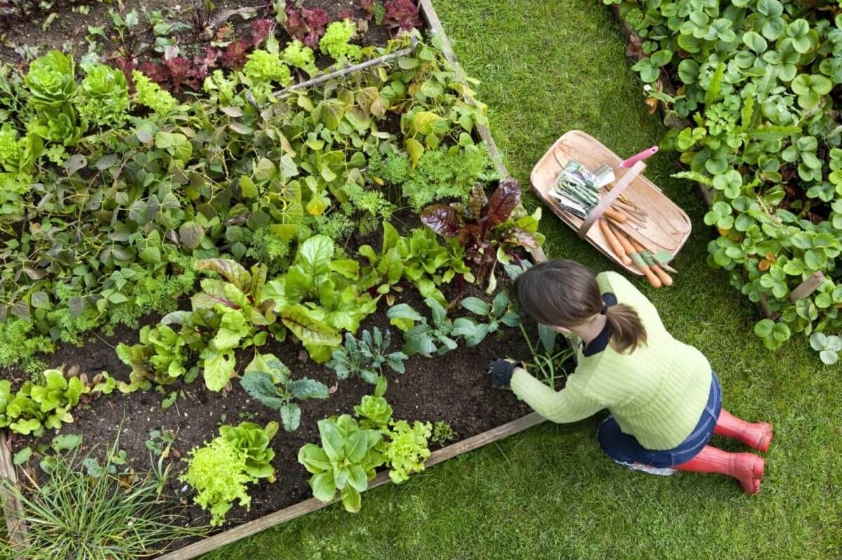 organic gardening mistakes