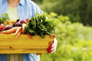 Planning Your 1st Organic Vegetable Garden