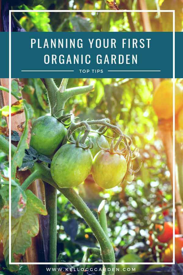 Planning your First Organic Garden Pin