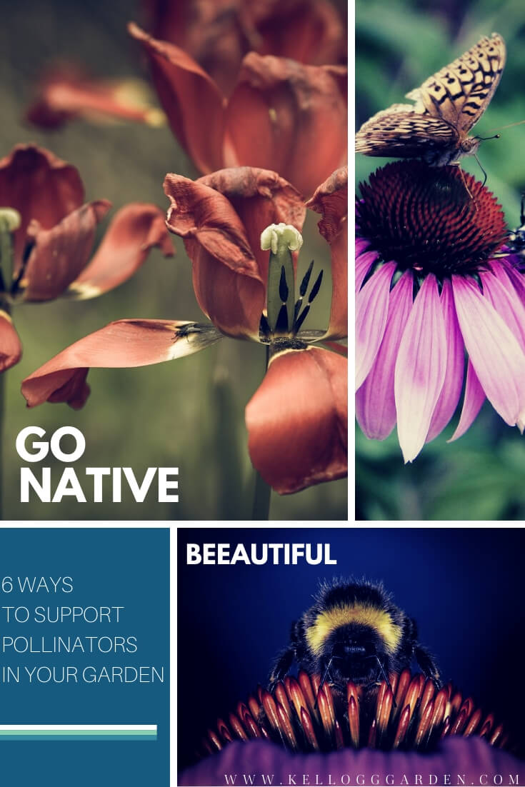 "Collage of bees and butterflies on flowers with text, ""Go native, ways to support local pollinators, 'beautiful'"""