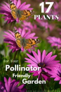"""Purple asters with monarch butterflies on them with text, """"17 plants for your pollinator friendly garden"""""""