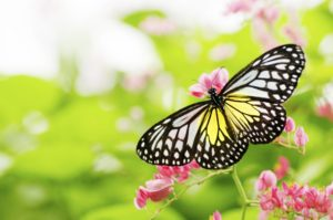 The Top 10 Plants that Attract Pollinators