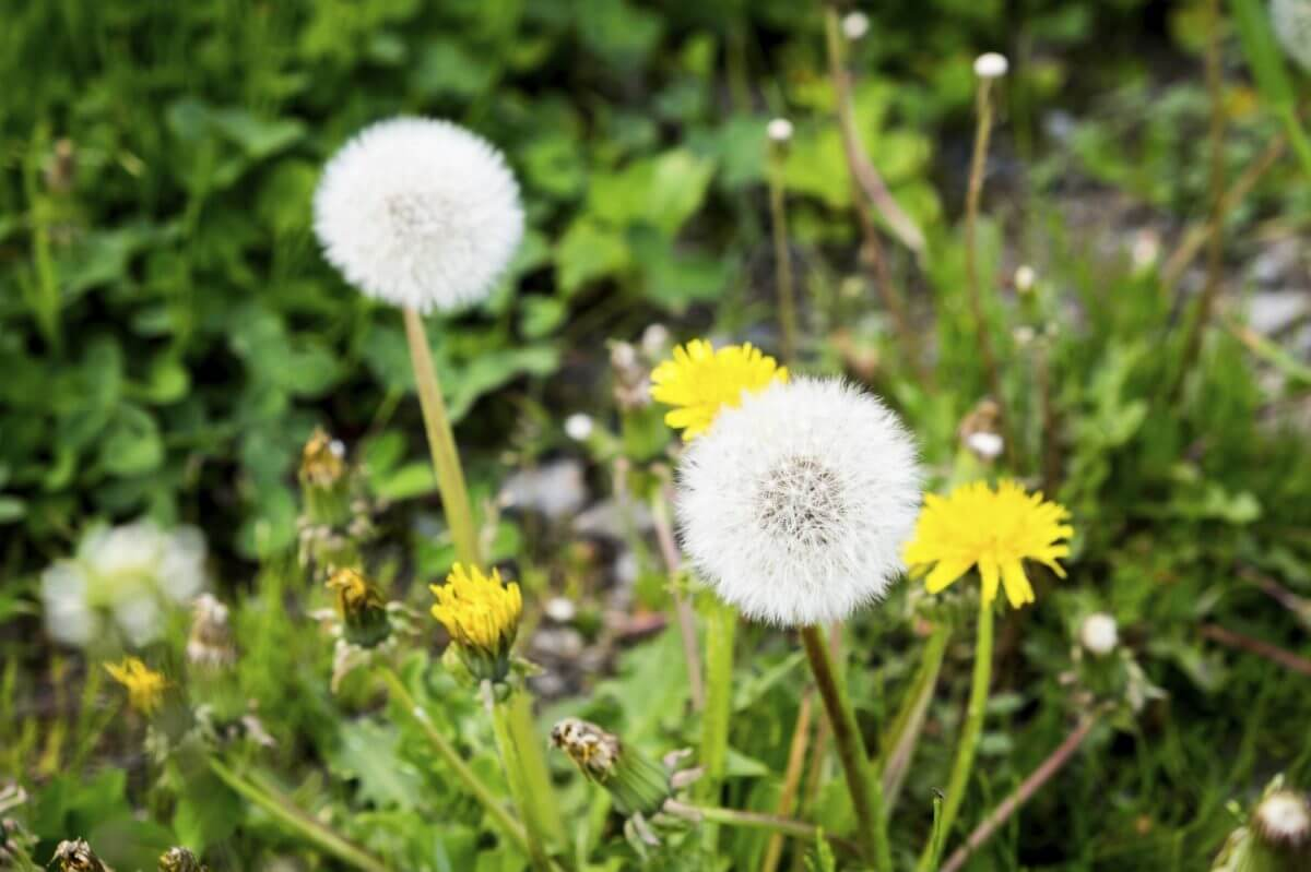 what your weeds say about your garden soil