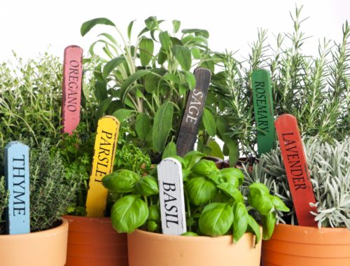Buy Herbs For Container Garden
