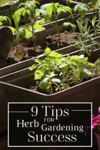 9 tips for herb gardening success