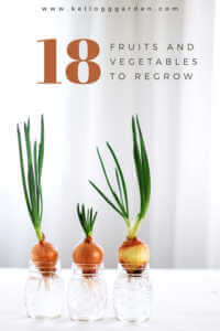 "Onions growing in glasses of water, ""18 fruits and vegetables to grow"""