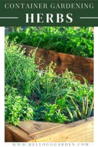 Container gardening herbs