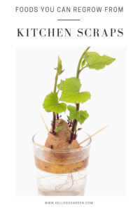 """Plant growing in a glass of water with text, """"Foods you can regrow from kitchen scraps"""""""