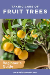 """Close up of a potted lemon tree with text, """"Taking care of fruit trees, beginners guide"""""""