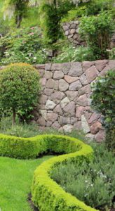 Hedge for Landscaping property lines