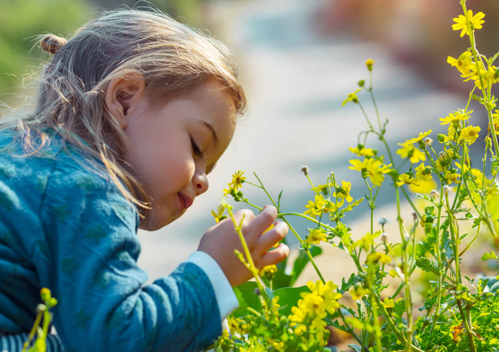 Little boy enjoying flowers aroma, with pleasure with closed eyes smelling gentle yellow wild flowers, enjoying beauty of fresh spring nature (Little boy enjoying flowers aroma, with pleasure with closed eyes smelling gentle yellow wild flowers, enjoy