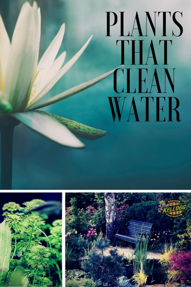 "Collage of water plants with text, ""Plants that Clean Water"""