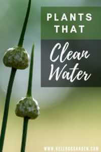 Plants that Clean Water