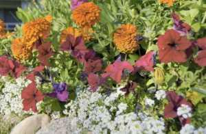 purple, pink, white, and orange flowers