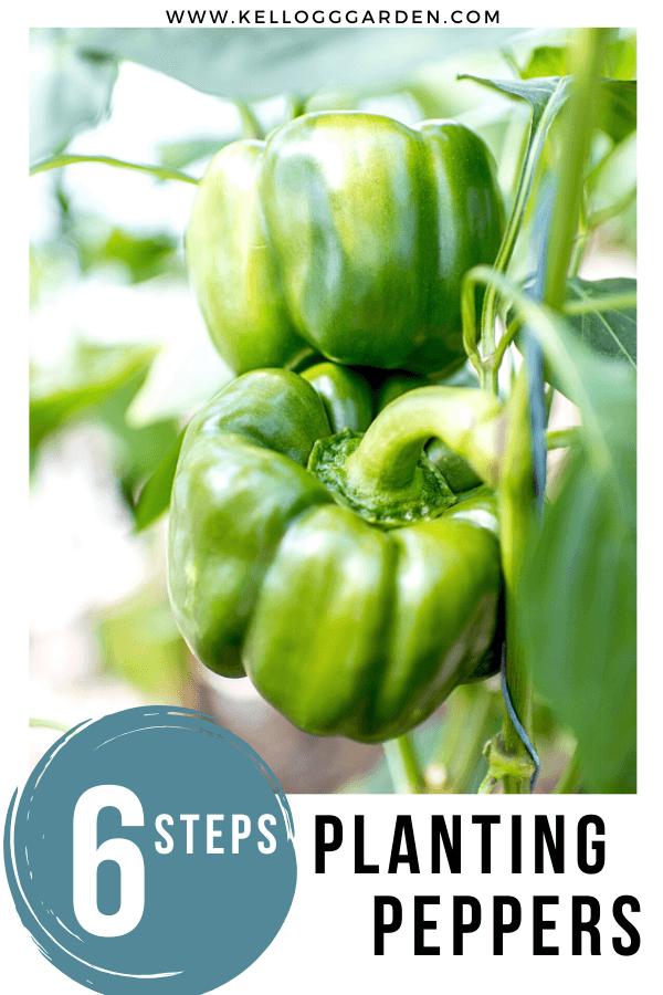 green bell pepper pin image
