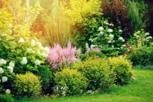 mixing green shrubs with pink and white flowers