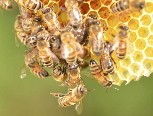 starting your own beehive