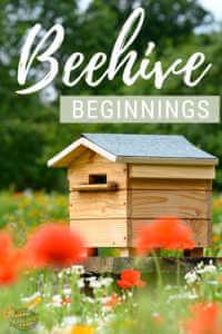 """Beehive in garden with text, """"Beehive beginnings"""""""