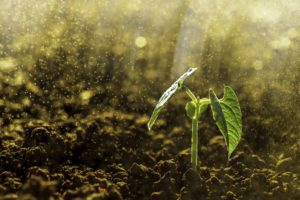 three things you want in your soil