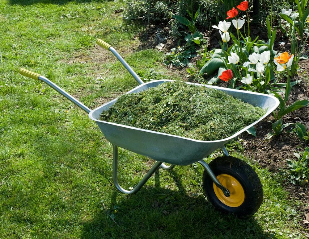 Wheelbarrow with Grass Clippings in a garden