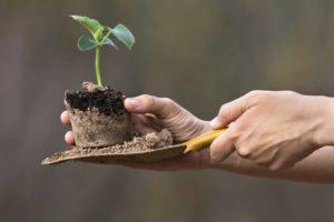 plant growing in organic soil