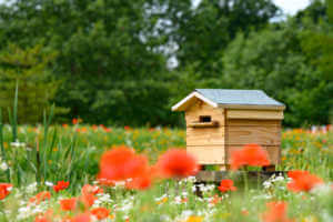 Bee House Hive with poppies and wildflowers in the foreground, trees in the background