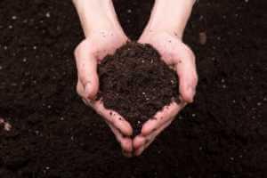brown fertilizer in hand