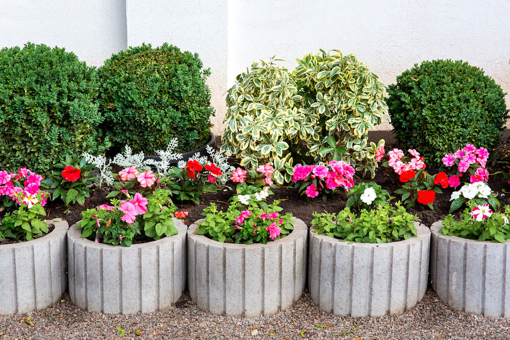 Circular, concrete flower pots with pink flowers.